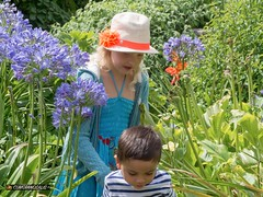 Kids and agapanthus (dossolite) Tags: wight botanicgarden agapanthus kids