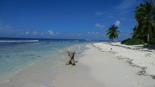 Dominican-Republic - Island of Saona - walking along the beach