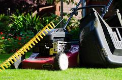 Gardening! (BGDL) Tags: lightroomcc nikond7000 afnikkor70300mm1456g bgdl lawnmower grassrake lawn gardening saturdaytheme yardgardenorhousework flickrlounge