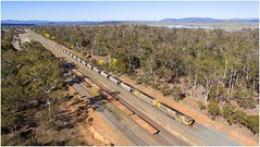 Trains In Tasmania - Fingal Coal Train at Conara (Trains In Tasmania) Tags: australia tasmania train coaltrain goodstrain freighttrain conarajunction conara yard rail railyard trees railwayline drone phantom3standard djiphantom3standard aerial view vista scene scenery tasrail trclass tr tr12 caterpillar trainsintasmania lindisfarne diesellocomotive stevebromley