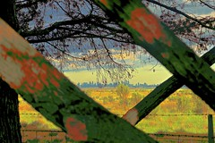 Melbourne City in the distance! (maginoz1) Tags: landscape cityscape abstract art surreal manipulated bulla melbourne victoria australia spring september 2016 canon g3x flora