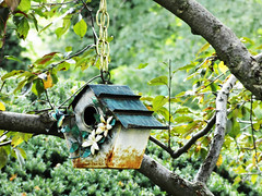 home sweet home (Lovely Pom) Tags: home cage birds sweet tiny small tree hanging house