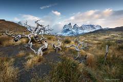 _NGR9988Arboles (ninograngetto@hotmail.com) Tags: paisaje patagonia torresdelpaine chile