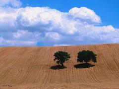Inseme a te, a guardare le nuvole passare (BORGHY52) Tags: montefano marche provinciadimacerata italy estate nuvole nubi nuvolecomepensieri collina colline collinemarchigiane alberi duealberi grano campodigrano campidigranomietuto giugno cielo cieloazzurro nuvoleincielo landscaepe beautifullandscapes