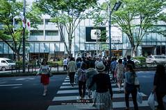 Tokyo Life, a sunny day in Tokyo (Pop_narute) Tags: sunnyday tokyo omotesando omotesandohill japan japanese people street road cross tree life