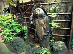 Tanuki (Ola 竜) Tags: tanuki raccoondog figure sculpture garden japanese traditional animal statue restaurant decoration display stones plants woodenfence tokyo japan 狸 youkai