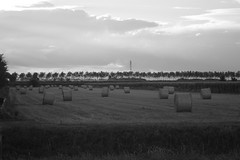 Grey field (francesca_siccardi new profile) Tags: summer bw grey horizon orizzonte campo field fieno