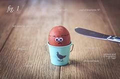 Shot for #FlickrFriday #Precision. (Matt_Briston) Tags: egg genocide formula science physics boiled matt cooper nikon d7000 flickrfriday precision chestnutmaran brown speckled