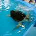 GA Sea Turtle Cntr 2