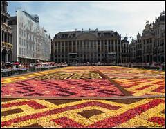 Flower Carpet (Shahrazad26) Tags: brussels belgium belgique grandplace belgië bruxelles brussel grotemarkt flowercarpet2012 tapisdefleurs2012