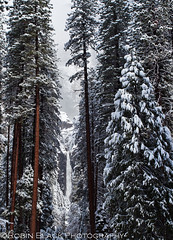 Lower Yosemite Falls, Winter (Robin Black Photography) Tags: california trees winter mist snow ice yosemitefalls landscape nationalpark ngc explore valley yosemite lower sierras sierranevada naturesbest highsierra clearingstorm explored nationalgeograhic rangeoflight outdoorphotographer canon5dmarkii robinblackphotography