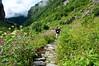 DSC_7873 (Sivaraj Mathi) Tags: nikon himalaya hemkund valleyofflowers vof nikond5000 himayam