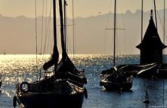 Matin orang (Diegojack) Tags: port soleil eau lumire lac bateaux paysages morges mfcc