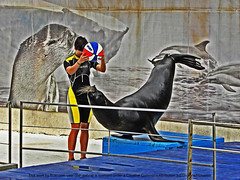 Sea lion in Constanta Dolphinarium (cod_gabriel) Tags: seaside romano seal romania sealion litoral dolphinarium foca constanta roumanie rumano rumanos dobrudja romnia dobrogea constana romanianseaside romenos delfinariu dobruca rumnen dobruja litoralulromanesc litoralulromnesc delfinariuldinconstana constantadolphinarium foc