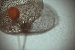 Laying down its' heavy shadow (Aikaterini Koutsi Marouda aka kotsifi) Tags: red stilllife flower texture composition vintage polaroid bokeh seed sphere network effect canoneos40d kotsifi aikaterinikoutsimarouda