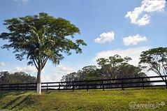 Uma segunda feira no campo... (GFerreiraJr ) Tags: brazil brasil nikon sp nationalgeographic d90 novohorizonte micmarayyo nikond90 flickraward nikonflickraward panoramafotogrfico touraroundtheworld flickrunitedaward novohorizontesp brasilemimagens gferreirajr