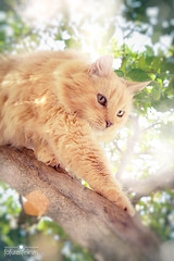 Venon in the tree (fofurasfelinas) Tags: cat gato neko fofurasfelinas catsanctuary catphotography gianeportal