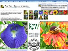 """Winners of Royal KEW Gardens' """"The Essence of Summer Photo Contest (May - August 2012)"""" (Kam Hong Leung  KEW Gardens_01) Tags: park wood autumn winter summer plant flower tree green london nature ecology grass kew fauna garden season insect photo spring flora education flickr gallery contest royal conservation competition science bee greenhouse stamen winner tropical environment botanic pollen botany wildflower horticulture glasshouse palmhouse leung biodiversity kewgarden londonpark botanist temperate stamina princessofwalesconservatory pollinator horticulturist waterlilyhouse leungkamhong beatriceleung yourkew naturalneighbourhood tempratehouse friendsofkew wilkamhongdlife"""