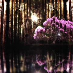 Sacred Tree (Imageation) Tags: pink trees light reflection tree water pool island lights woods colours forrest nightlight sacredtree