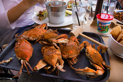 Baltimore: It's about the crab (gastonl.com) Tags: crab baltimore