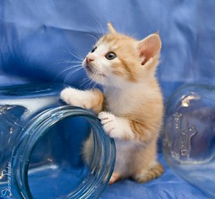 20110723_18734b (Fantasyfan.) Tags: blue pet glass look animal topv111 pose furry topv333 kitten fluffy jar curious fantasyfanin pelko highqualityanimals