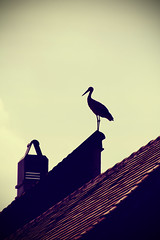 Stork on Roof (CoolMcFlash) Tags: roof light chimney house bird animal silhouette standing canon vintage eos austria licht sterreich haus fav20 retro tamron dach vignette stork tier vogel burgenland gettyimages storch softtones umris rauchfang fav10 stehend 18270 60d b008 mrbisch