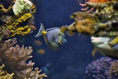 Acquario di Genova (Alessio Rizzi) Tags: park parco fish water animals zoo nikon d acquarium genoa genova pesci di acqua acquario animali 3100 d3100 nikond3100