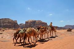 Desierto Wadi Rum (E.J. Melian G.) Tags: jordania jordan camello camel wadirum