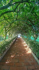 Canopy (mnika4) Tags: garden canopy leaves cover brick path house sun light shine shadow framing texture green perspective dynamic different beautiful trees cyprus lg lgg5 phone
