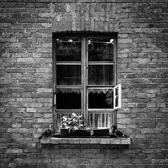 Window. (Tomasz Aulich) Tags: people human bird plant flower brick glasses glass street streetphoto streetphotography fotografiaczarnobiala fotografiauliczna travel ksiezymlyn lodz poland nikon building architecture urban outdoor city shadows real