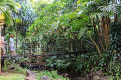 Princeville_Botanical_Gardens-5 (Chuck 55) Tags: princeville botanical gardens kauai kauaihawaii