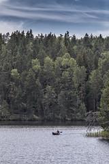 canoeing (sami kuosmanen) Tags: repovesi suomi finland forest nature national park kouvola kansallispuisto mets meloa melonta valo vesi water man mies jrvi luonto light landscape lake taivas tree sky summer kes canoeing canoe kanootti scenery maisema