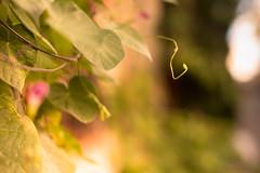 The seed - La semilla (Nathalie Le Bris) Tags: seed graine semilla green vert verde closeup dof bokeh