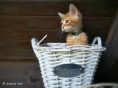 what's up (skistar64) Tags: katze kitten wally daham pisweg krnten carinthia