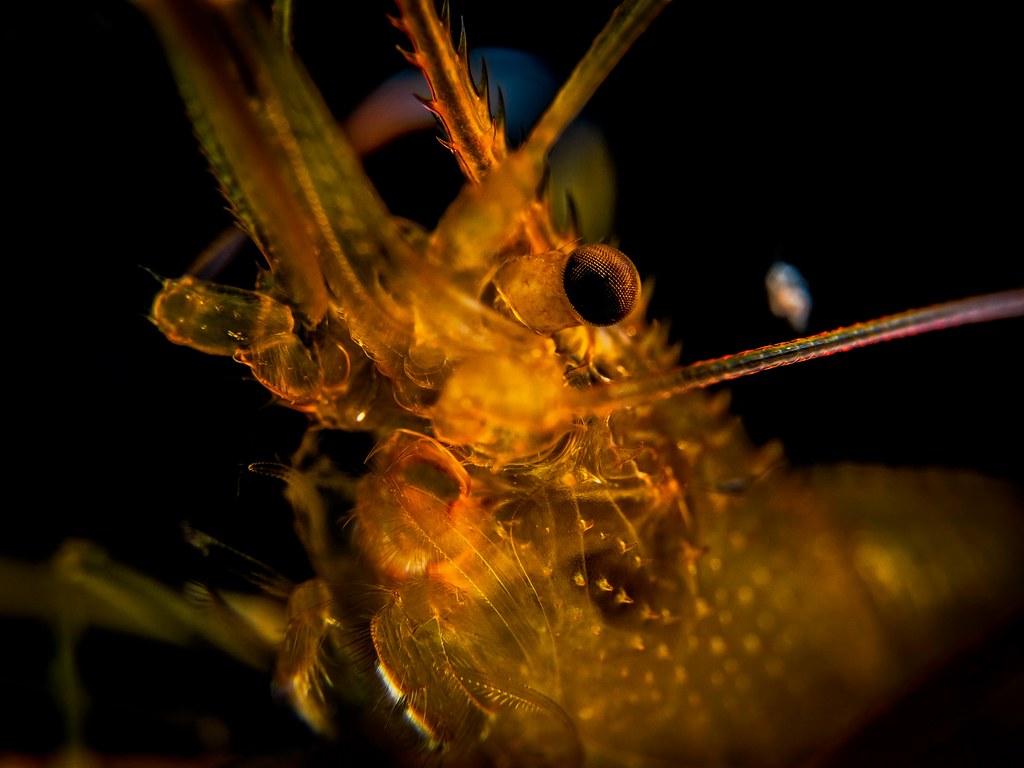 The Worlds Best Photos Of 45mm And Leica Flickr Hive Mind Panasonic Dg Macro Elmarit F 28 Asph P7110441 Jeannot Kuenzel Tags Jeannotkuenzel Wwwjk4unet Jk4u Malta Scuba Under Water