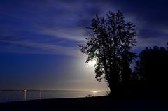 No Rush (faithroxy) Tags: trees silhouette picnictable moonlight moonlit moon reflection nightscape sky nightphotography outdoors lake alberta pigeonlake provincialpark beach canada fullmoon harvestmoon outdoor serene tree