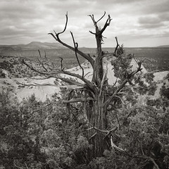 (engjoneer) Tags: film hc110b hp5 landscape mamiya6 mamiyag50mmlf4