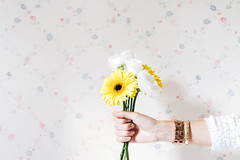 1/100 - Welcome Spring (_Andrea_) Tags: 100happydays spring yellow flowers beautifullight gerbera