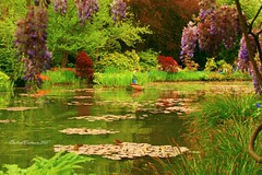 Jardin de Claude Monet (DulichVietnam360) Tags: travel lake france nature garden french lac monet giverny claudemonet h vn php thinnhin jardindeclaudemonet dulichvietnam360 chuu phpfrancedulichvietnam360phpchu dulchncngoi trnthihaphotography