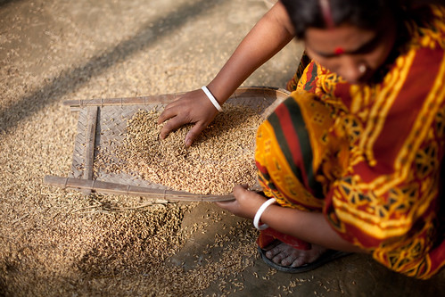 Preparing rice husks, Khulna, Bangladesh. Photo by Mike Lusmore, 2012.