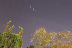 Tree Trails (Shayne Kaye) Tags: trees canada night stars star bc harbour britishcolumbia trails victoria inner jamesbay startrails