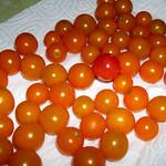 Farmer's Market Sun Gold Tomatos (4) thumbnail