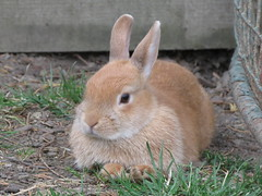 Bunny (©Gav.B Photography) Tags: rabbit bunny highqualityanimals