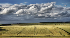 From The Packway (Humphrey Hippo) Tags: uk england sky field clouds canon landscape explore gb salisbury wiltshire pewsey explored niksoftware 1585mm canon7d canonefs1585mmf3556isusm snapseed