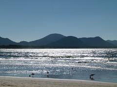 Barra da Lagoa (Ale.Almeida.Photos) Tags: floripa praia beach sc gaivotas florianópolis barradalagoa santacatarina