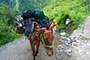 Thanks god he was there to carry our luggage (Sivaraj Mathi) Tags: nikon himalaya hemkund valleyofflowers vof nikond5000 himayam
