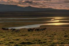 Sunset with horses (Fil.ippo) Tags: travel light sunset horse landscape island iceland nikon tramonto viaggi cavallo filippo luce paesaggio islanda d7000 filippobianchi