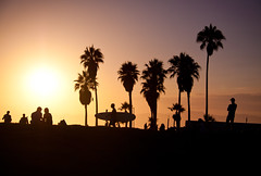 Venice Beach at Sunset - Los Angeles, CA (ChrisGoldNY) Tags: california travel venice trees sunset la losangeles surf forsale silhouettes surfing palmtrees viajes posters beaches albumcover venicebeach bookcover surfboards westcoast bookcovers albumcovers laist thechallengefactory chrisgoldny chrisgoldberg chrisgold chrisgoldphoto chrisgoldphotos