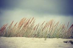 grass 237/366 on explore (la cegna) Tags:
