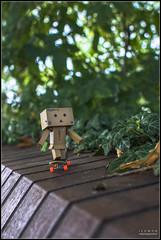 Skater (Only in RAW ) Tags: japan toys happy robot amazon box explorer mini days cardboard danny 365 danbo amazoncojp revoltech danboard minidanbo
